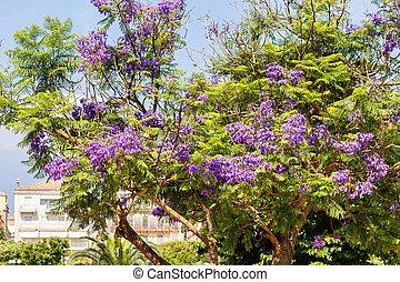 beau, pourpre, arbre, vert, jacaranda, fleurs