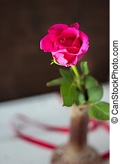 beau, pourpre, rose, rose., une, bud.