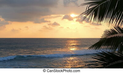 beau, premier plan, feuille, paume, mer, coucher soleil