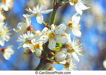 beau, printemps, bokeh