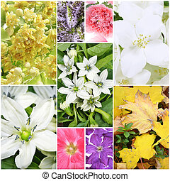 beau, printemps, collage