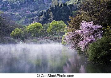 beau, printemps, corée, sud, paysage