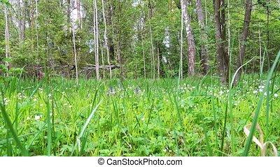 beau, printemps, day., forêt, clairière