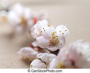 beau, printemps, fleur