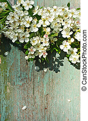 beau, printemps, fleurs blanches