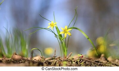 beau, printemps, fleurs jaunes, vaciller, vent
