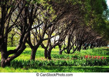 beau, printemps, floraison, parc, ensoleillé, tulipes, jour