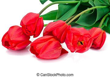 beau, printemps, fond, tulipes, fleurs blanches
