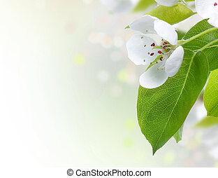 beau, printemps, frontière, fleurs