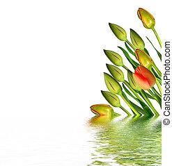 beau, printemps, isolé, arrière-plan., tulipes, fleurs blanches
