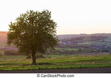 beau, printemps, lointain, village, collines, arrière-plan., concept., champ, harmonie, paisible, coucher soleil, beauté, nature, grand, entre, croissant, seul, arbre, calme, vert, petit, jardins, vue