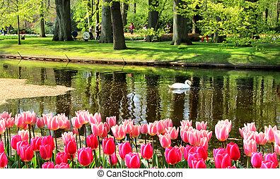 beau, printemps, parc, étang