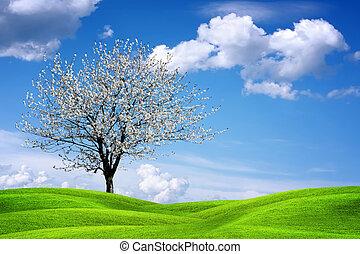 beau, printemps, paysage