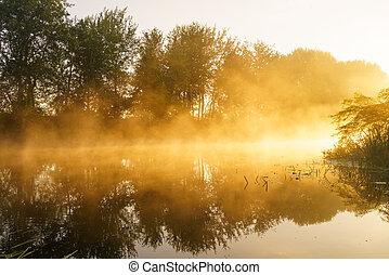beau, printemps, sur, brumeux, aube, rivière
