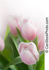 beau, printemps, tulipes