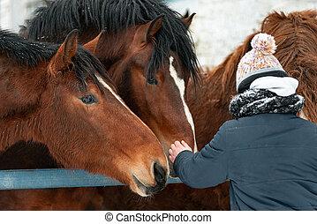 beau, purebred, chevaux