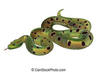 beau, réaliste, serpent vert