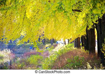 beau, réservoir, mungwang, automne, corée sud, paysage