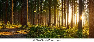 beau, rayons, silencieux, printemps, clair, forêt, soleil