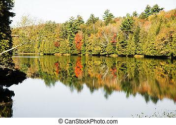 beau, refléter, arbres, automne