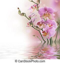 beau, reflet, orchidée