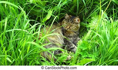 beau, reposer, grass., mensonges, chat