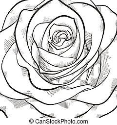 beau, rose, blanc, arrière-plan noir