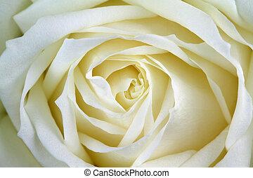 beau, rose, blanc