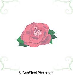 beau, rose, blanc, isolé, fond