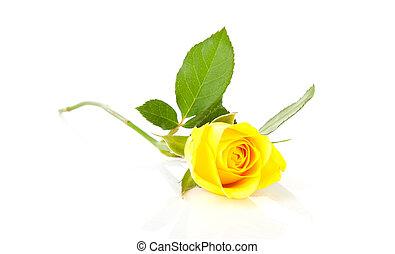 beau, rose, jaune