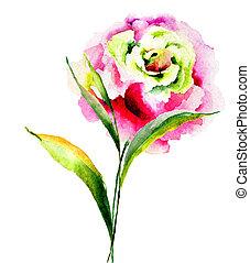 beau, rose