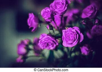 beau, rose, pourpre