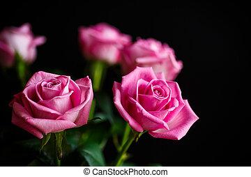 beau, rose rose