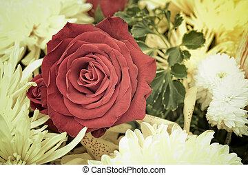 beau, rose rouge, fleur, vendange, style