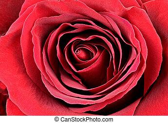 beau, rose, rouges