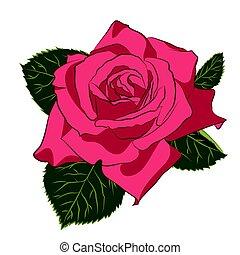 beau, rose, silhouette, stylization, flower., plat, couleur, vendange, isolé, rose, arrière-plan., blanc, botanique