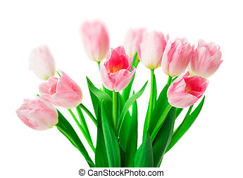 beau, rose, tulipes, isolé, arrière-plan., fleurs blanches