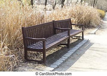 beau, roseaux, autour de, coloré, ensoleillé, garez banc, automne, blured, jour