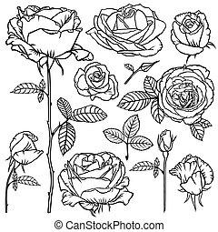 beau, roses, fleur, ensemble, contour