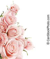 beau, roses, frontière