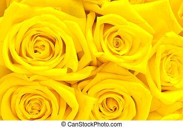 beau, roses, jaune