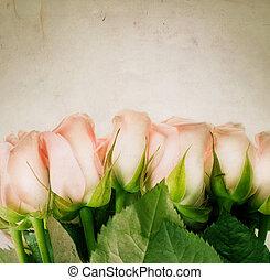 beau, roses., sépia s'est harmonisée