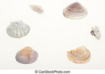 beau, seashells, à, gratuite, espace, pour, texte