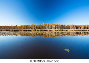 beau, season., cle, ensoleillé, jour automne, forêt,...