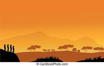 beau, silhouette, après-midi, meerkat
