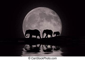 beau, silhouette, de, éléphants africains, à, lever lune