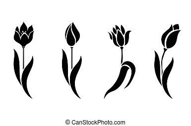 beau, silhouettes, tulips.