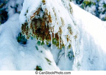 beau, smrek., arbre., neige, détail