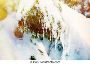 beau, soleil, light., neige, arbre, détail, smrek.