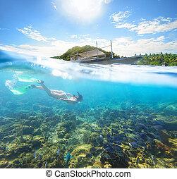 beau, sous-marin, île, PHILIPPINES, ensoleillé, apo,...